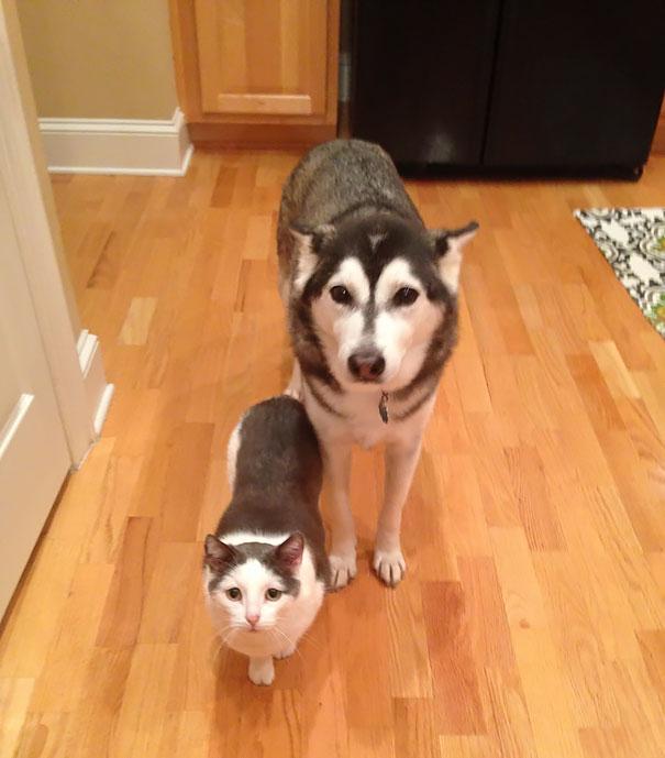 Хозяева чисто случайно подобрали на улице кота, который очень сильно поход на их собаку.
