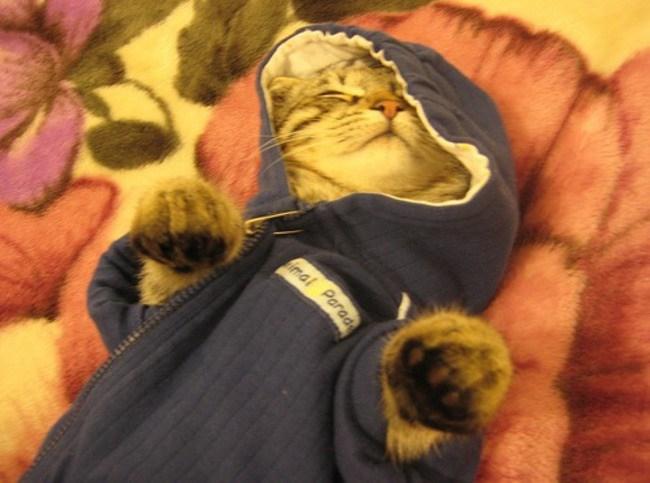 кошка в кардигане