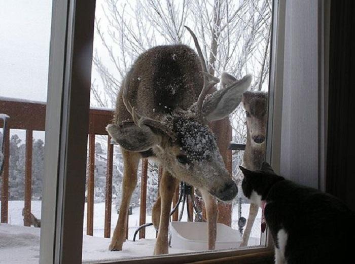 Слушай, котик, ты не мог бы открыть дверь?
