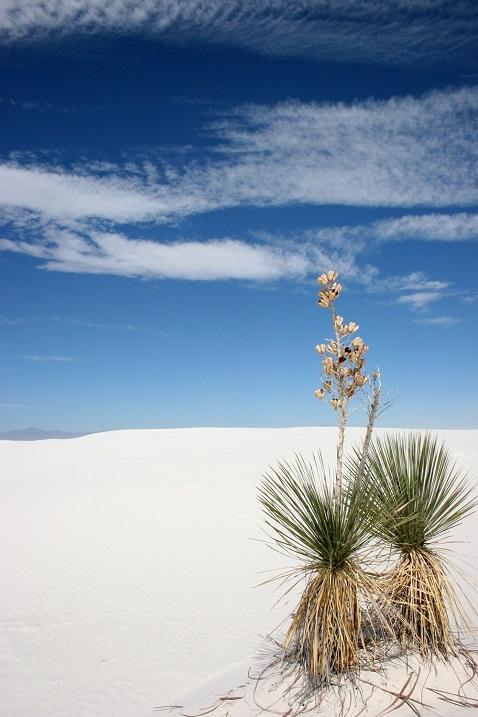 Пустыня Белых Песков в Нью-Мексико. Фото