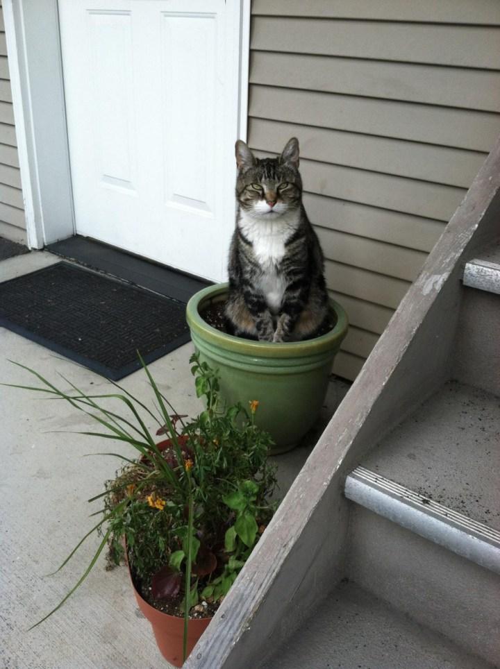 кошка в цветочном горшке