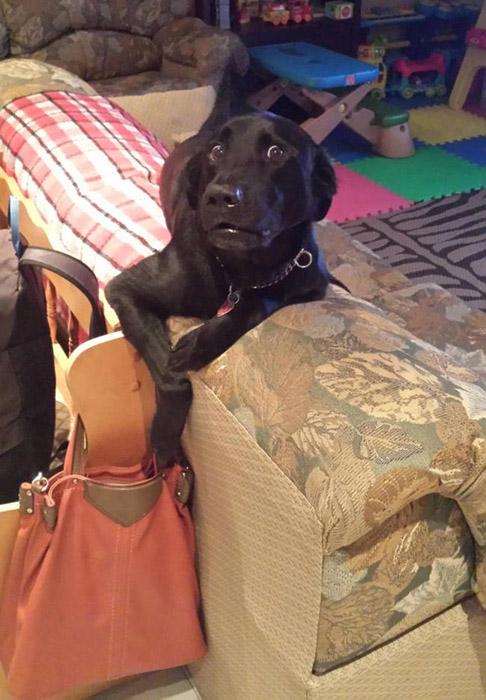 Моя лапа просто так лежит, я ничего не собирался брать в твоей сумке.