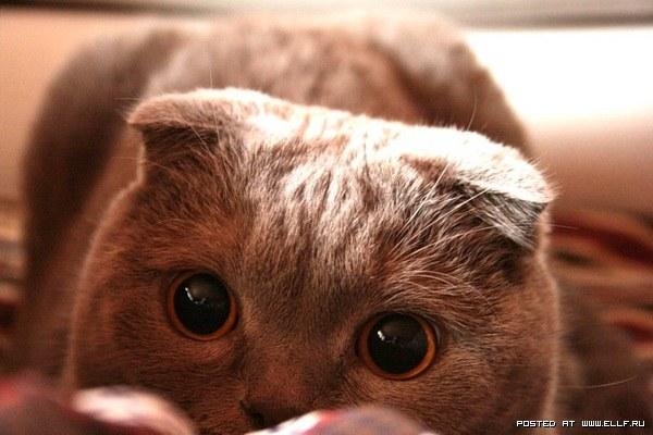 Смешные коты в засаде (30 фото)