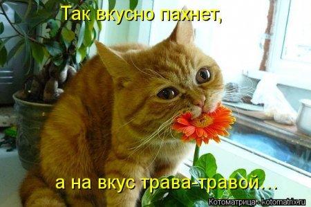 Крутые коты в котоматрицах прикольных.