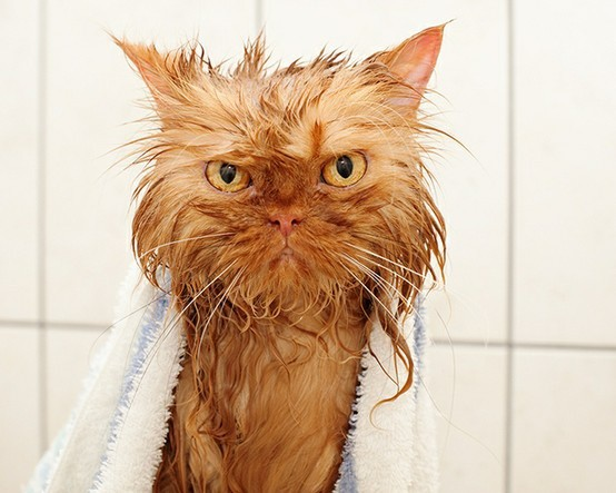 Трагедии свежевымытых котов коты, фото котов, юмор
