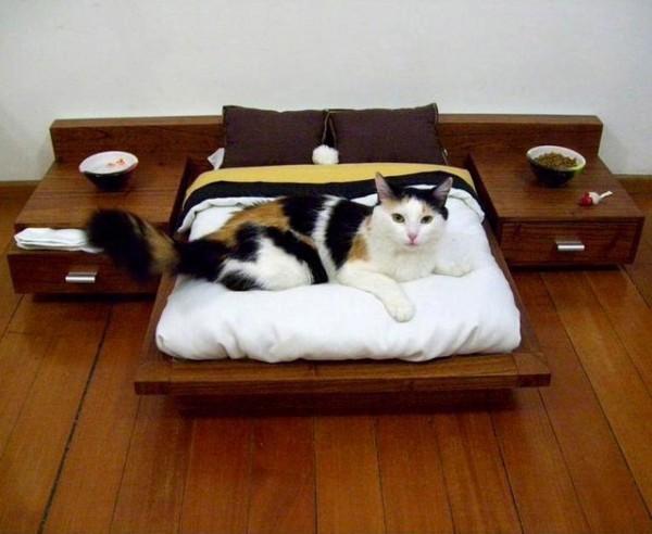Сделать своими руками кроватку для кошки