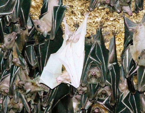 Топ 25: Потрясающие белые животные или альбиносы, на которых интересно посмотреть