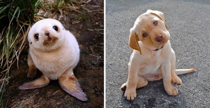 Маленькие тюлени это щенки, большие тюлени это собаки.