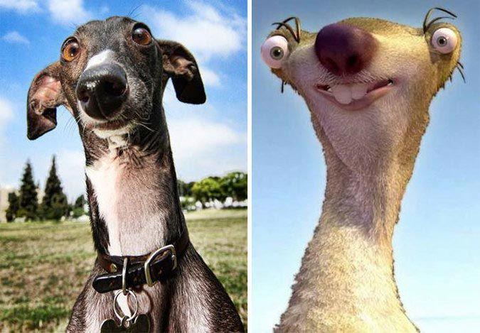 20 смешных собак, напоминающих что угодно, только не животных
