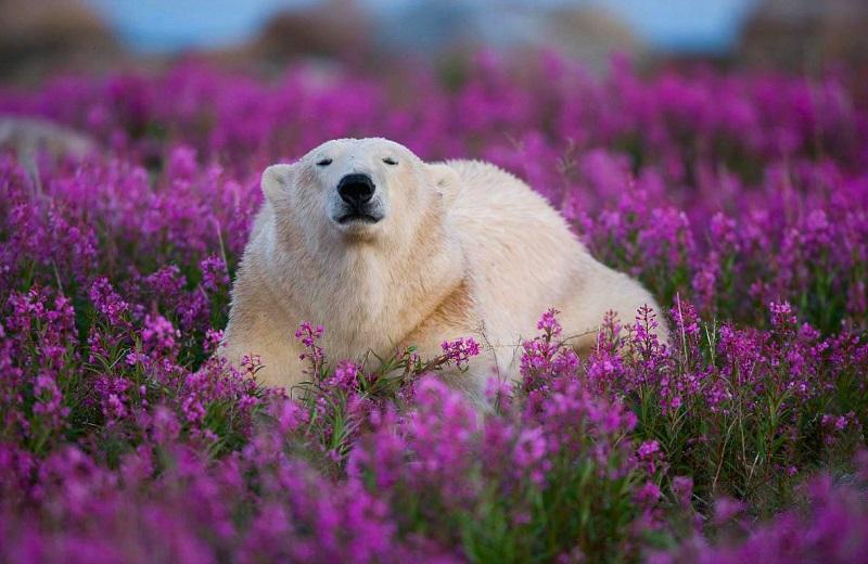 У багатьох тварин є улюблені запахи. 10 кумедних і цікавих фактів