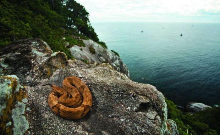 Остров известен как место обитания одной из опаснейших змей мира — островного ботропса.