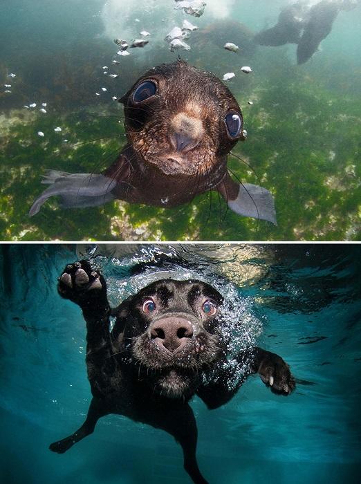 У каждого животного своё чувство под водой.