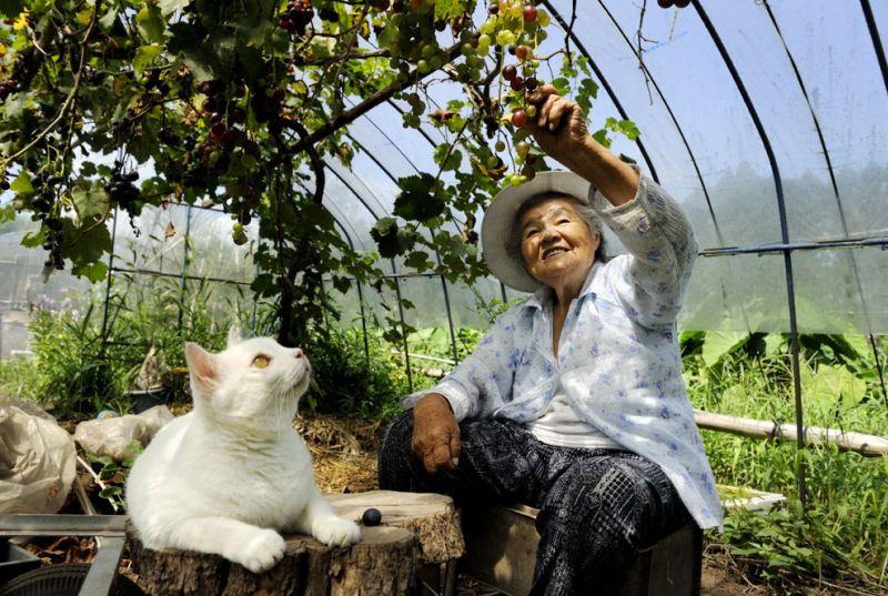 Японские бабушки онлайн фото 661-109