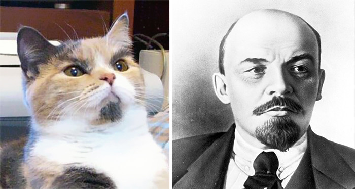 12.  животные, коты, юмор