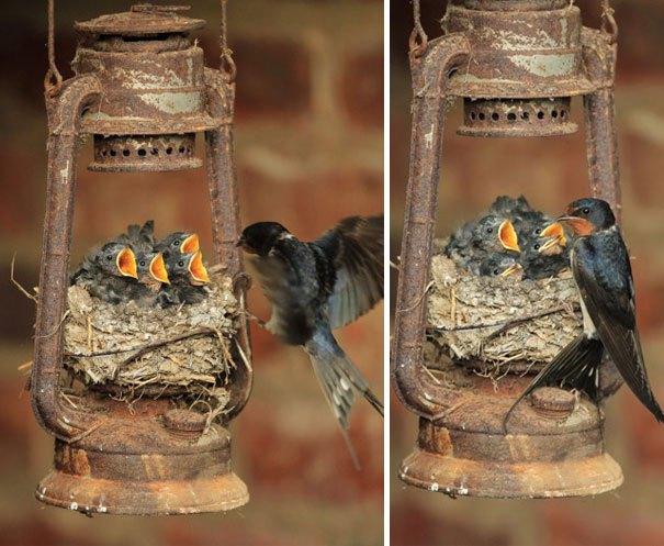 птичьи гнезда, свитые в необычных местах