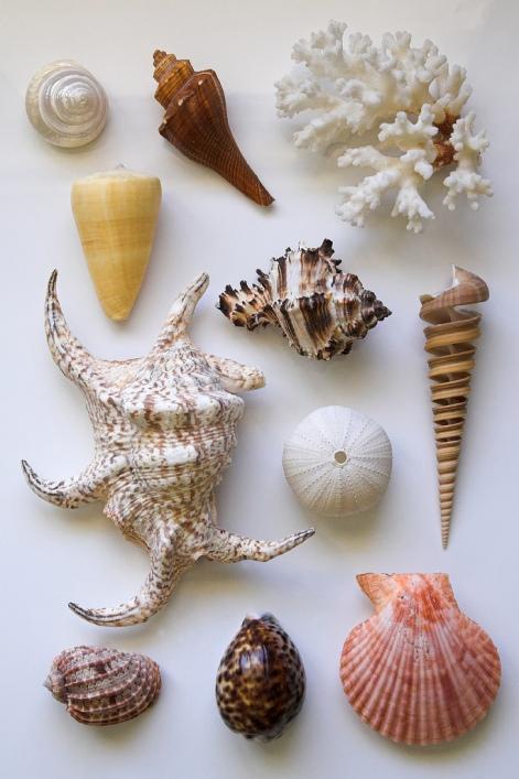 Натюрморт из морских раковин. Фото