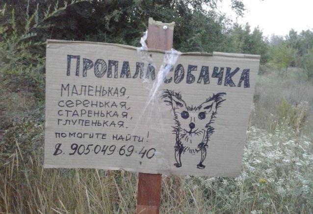 Иногда объявления не столько смешеные, сколько милые животные, коты, прикол, юмор