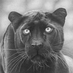 Графитовые портреты животных