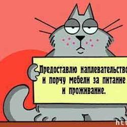 Про милую кошечку;)