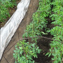 Инструкция по пересадке рассады помидоров в грунт