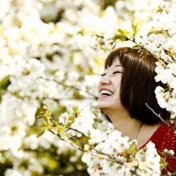Япония: сакура цветет