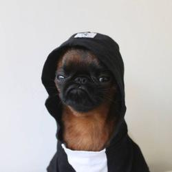 Пёсик Гизмо, который всегда чем-то недоволен