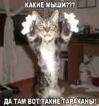 Смешные фото приколы и мемы с котами и кошками