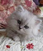 28 поводов завести кота...)))