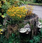 Пни в саду — возможность для необычного оформления