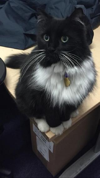 Как кот сделал карьеру в железнодорожной компании