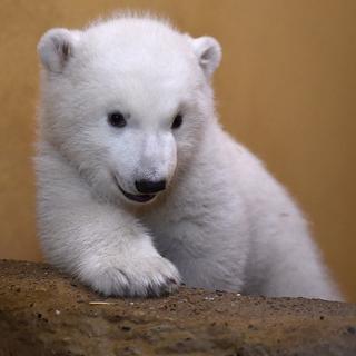 Один день из жизни белого медвежонка