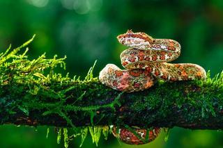 Змеи во всей своей красе