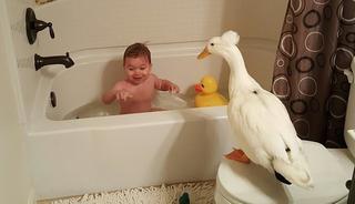 Малыш и утка