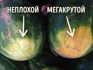 Как правильно выбирать арбуз: трюки, о которых поведал фермер