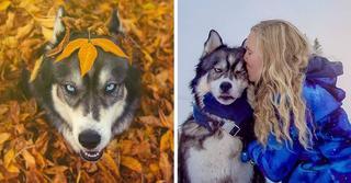 Как собака и девушка спасли друг друга