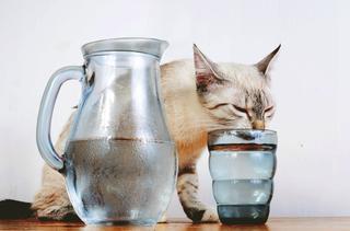 Странные привычки: почему животные так делают