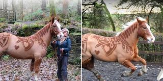 Лошадь с необычной стрижкой