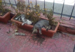 Коты-садоводы, даже когда их не просят…