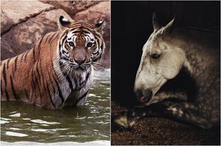 Талантливые фотографии животных от Шарлотты Дюма