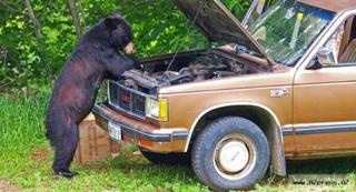Медведи за работой