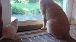 Долой стереотипы: когда кошка и крыса — лучшие друзья