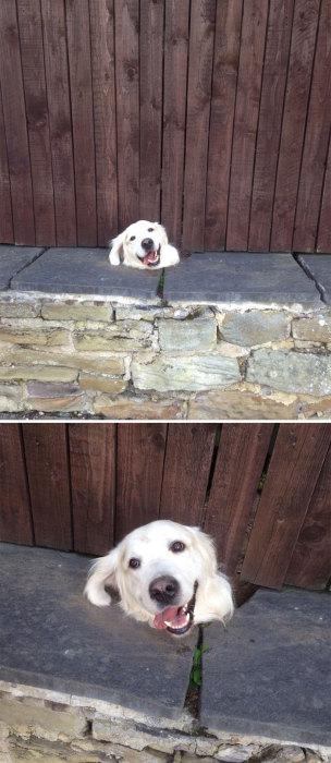 Жизнь за забором: 15 очаровательных собак, которым очень интересно узнать, что творится по ту сторону паркана