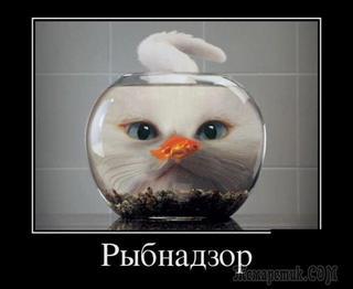 Немного демотиваторов для поднятия настроения.....))))