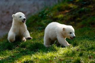 Трогательные малыши в дикой природе