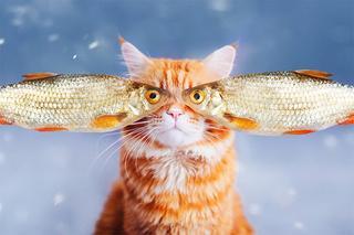 Новая звезда Сети — кот Котлета