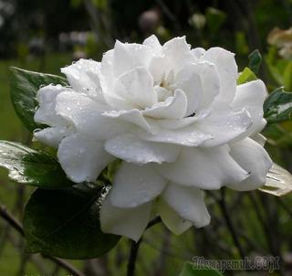 10 цветов с чарующим ароматом