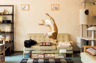 Уморительные фотографии кошек в момент прыжка