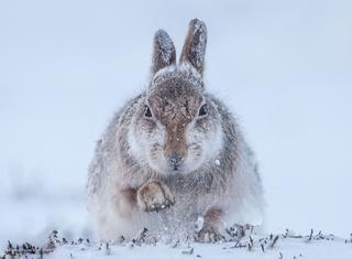 Фотографии дикой природы Wildlife Photographer of the Year