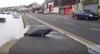 Как в рыбном ресторане появился новый завсегдатай — тюлень
