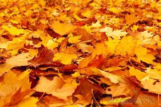 Вторая жизнь опавшей листвы